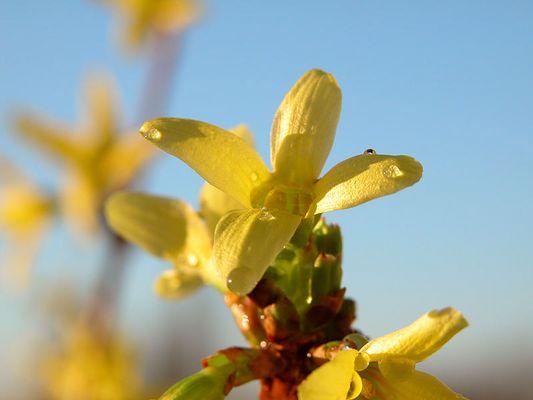 ...Frühling !!!