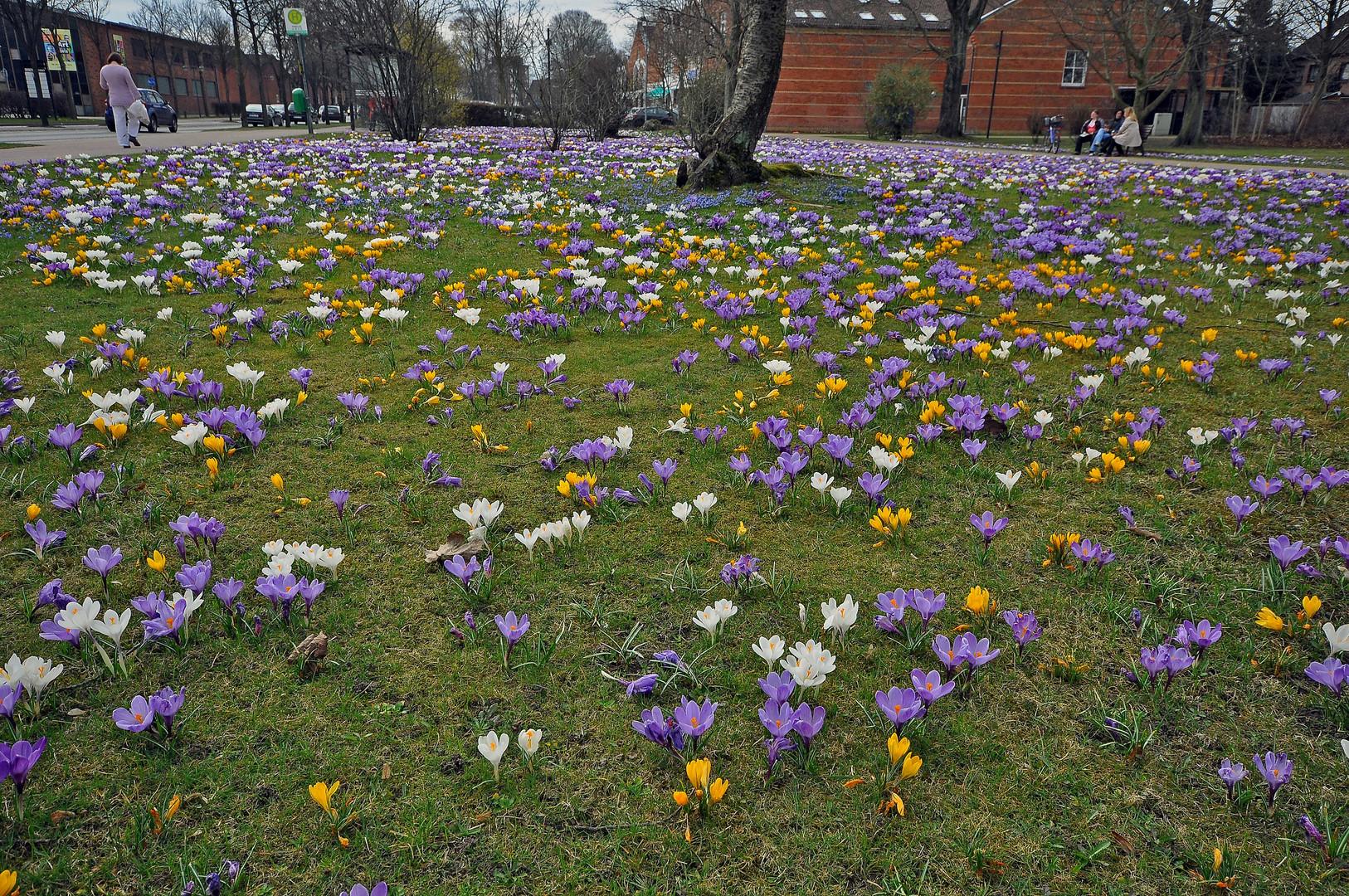 Frühling !