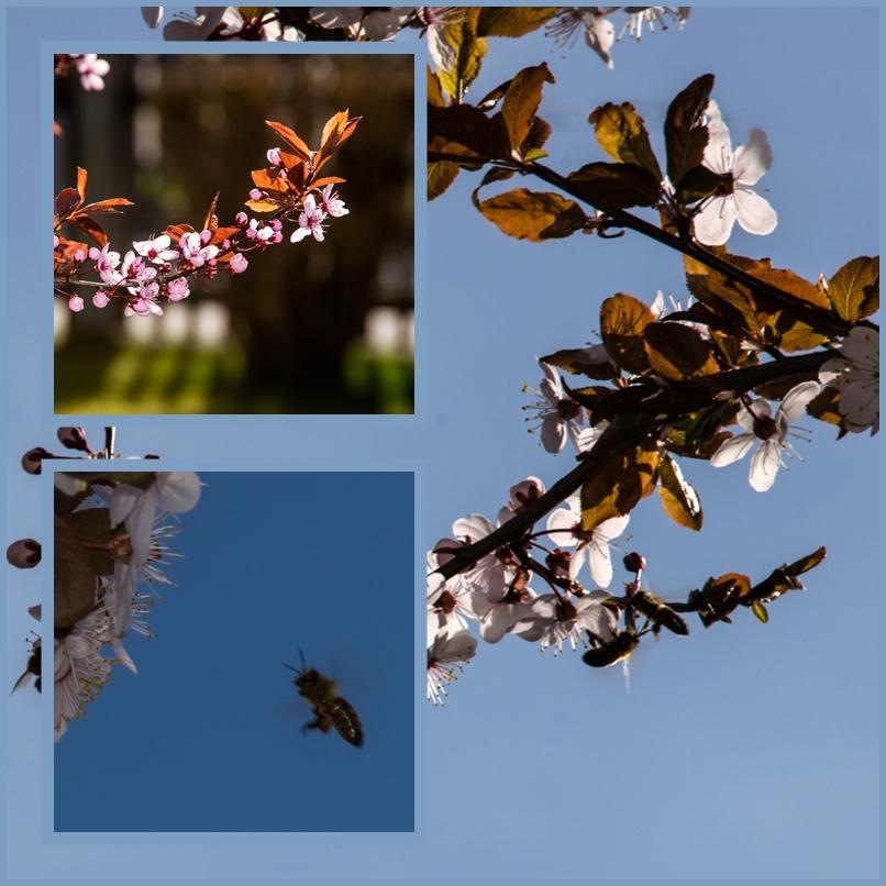 Frühling...