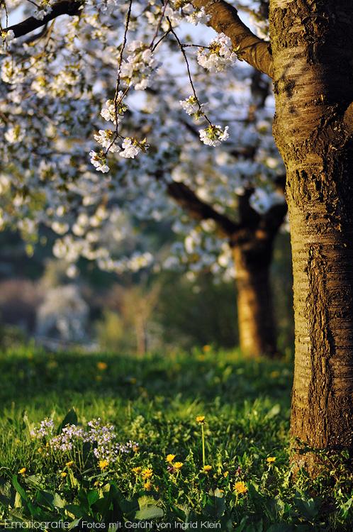 Frühling allerorts