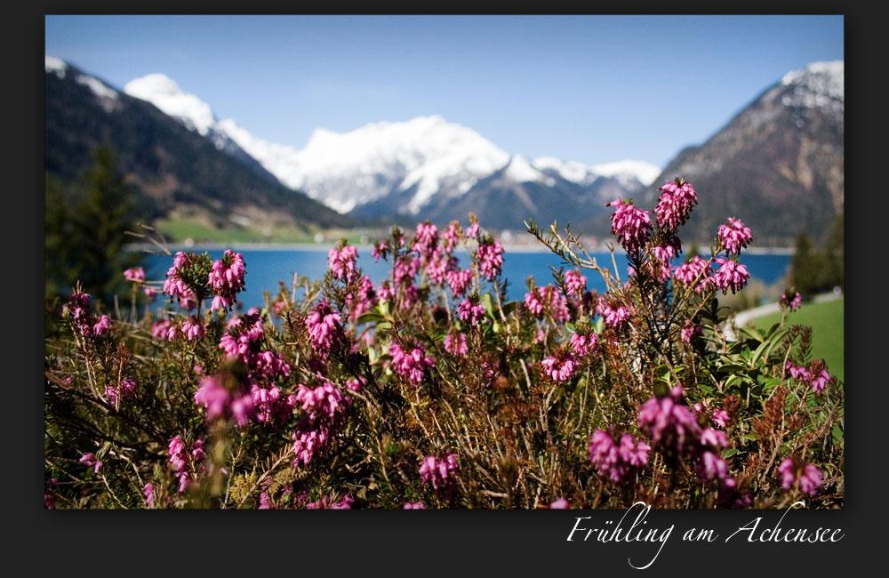 Frühling am Achensee