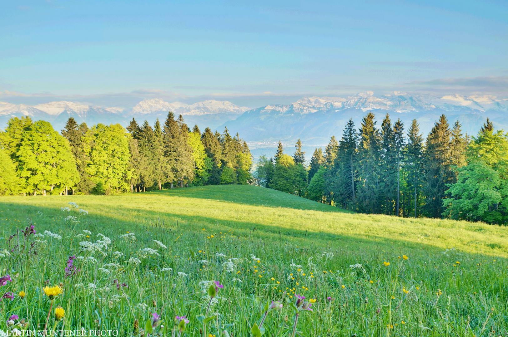 Frühling am Berg