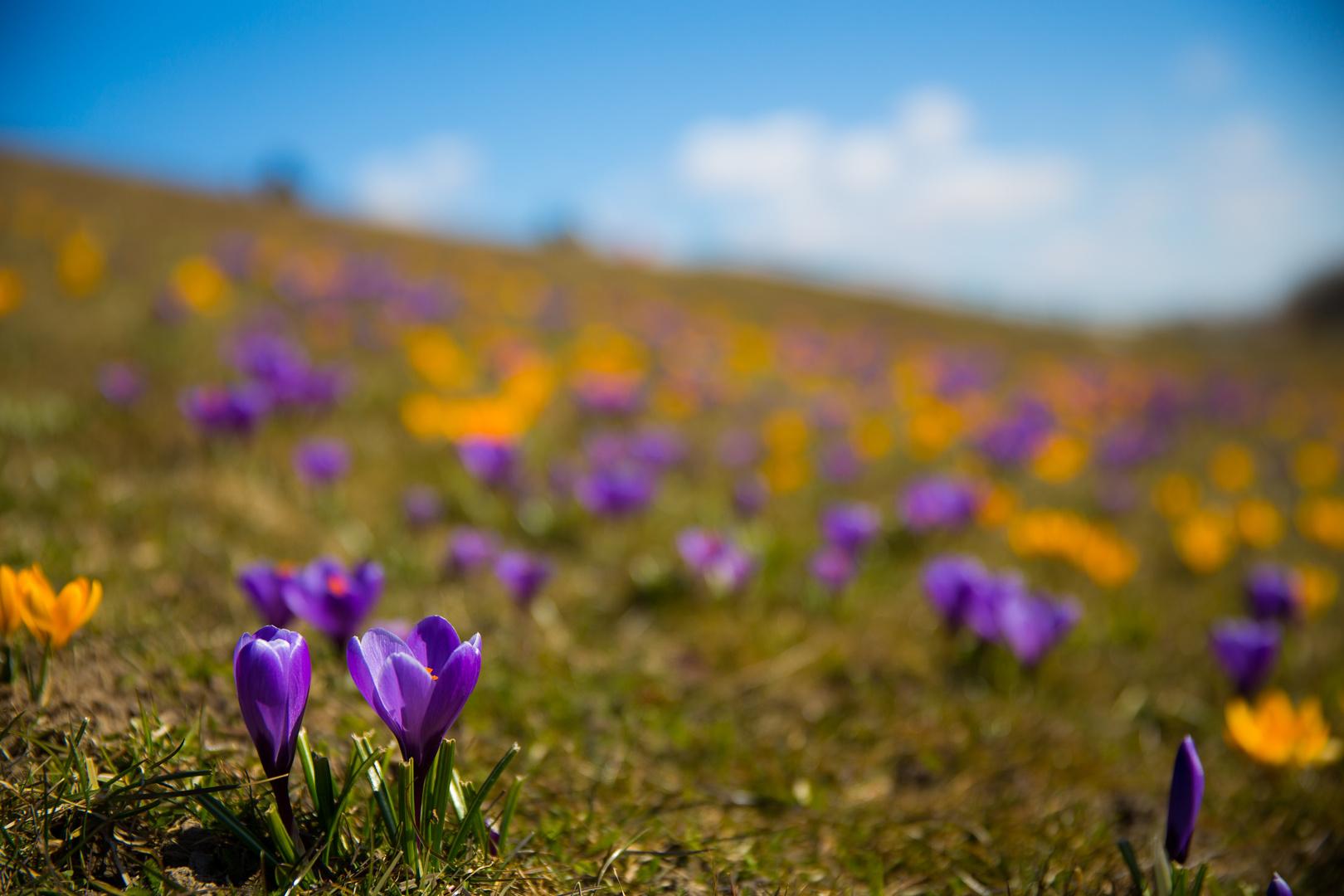 Frühling am Deich