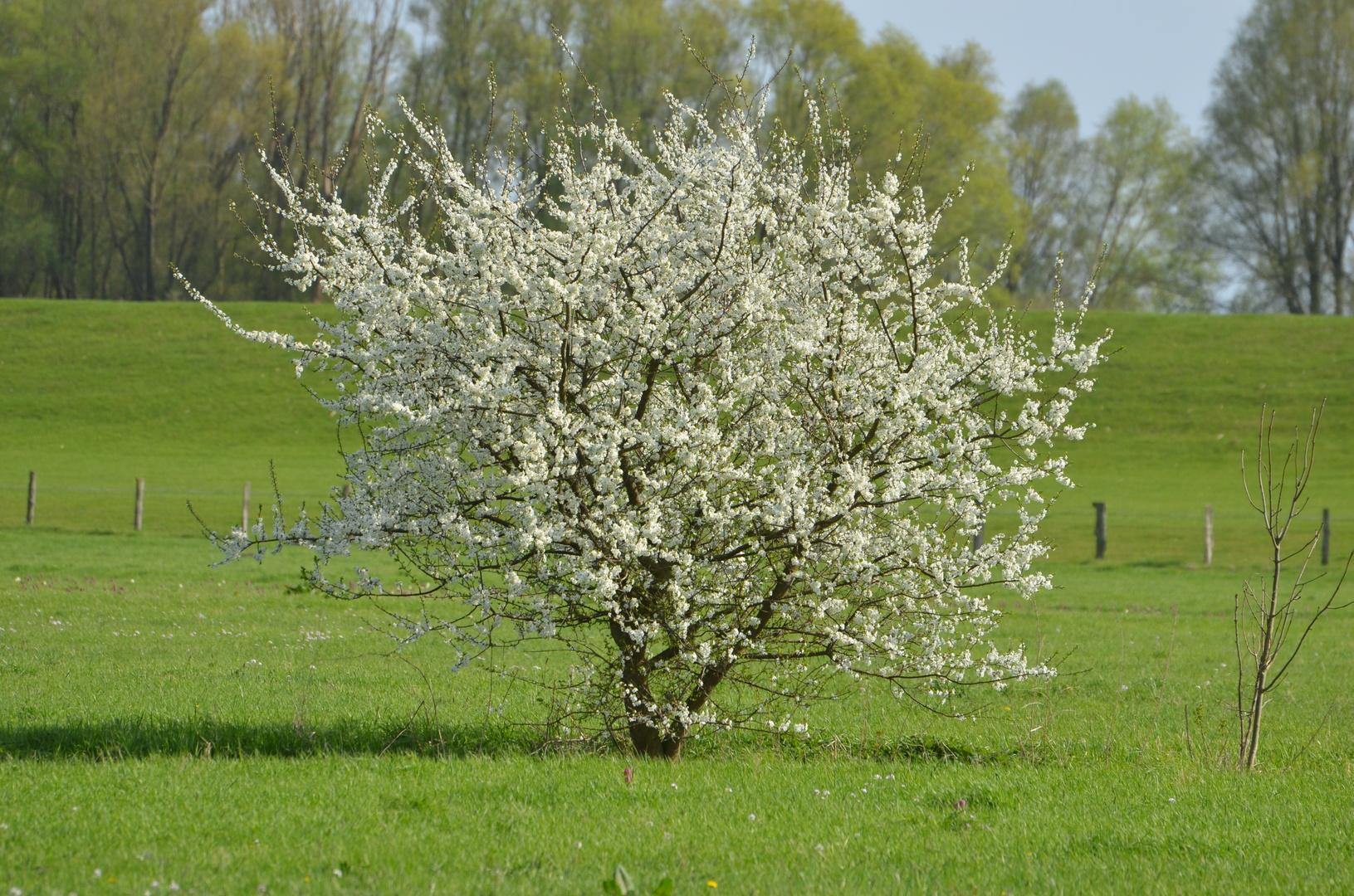 Frühling am Elbdeich bei Fährmannsand - Deutschland