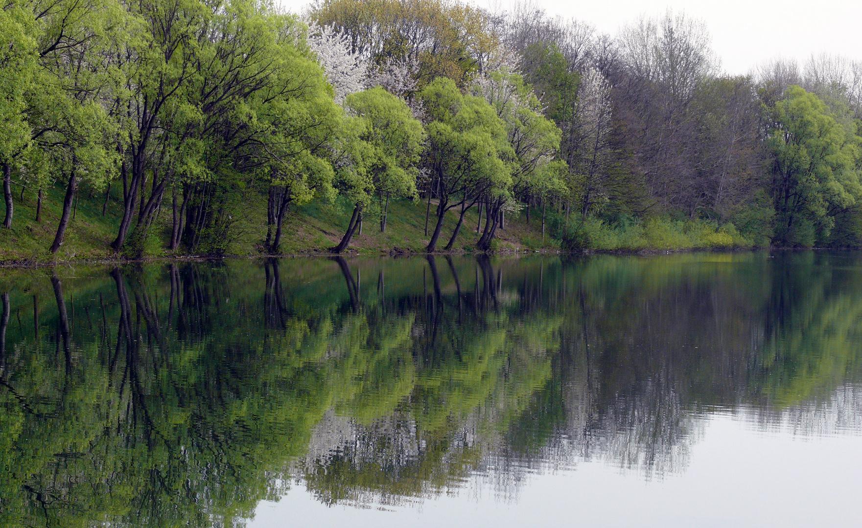 Frühling am Fichtensee