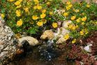Frühling am Gartenteich