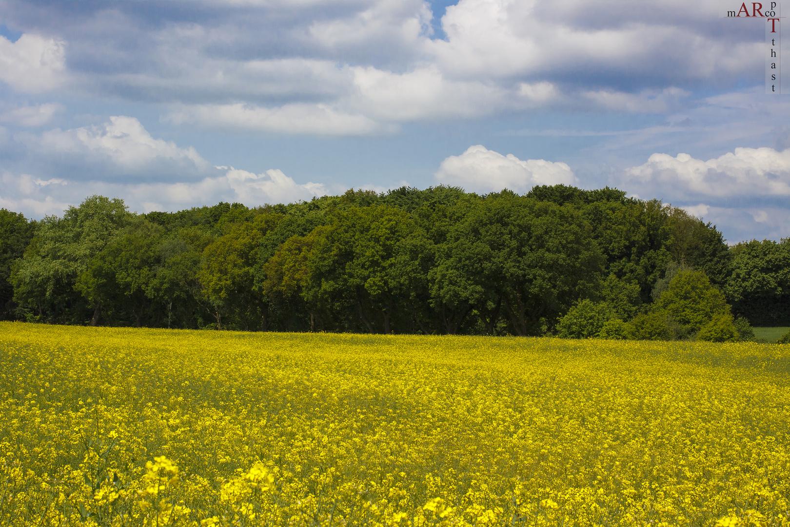 Frühling am Gysenberg