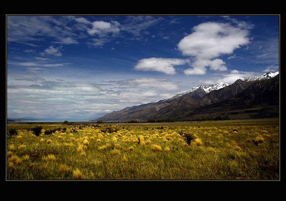 Frühling am Lake Pukaki ( NZ )