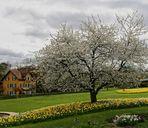 Frühling am Neckar4