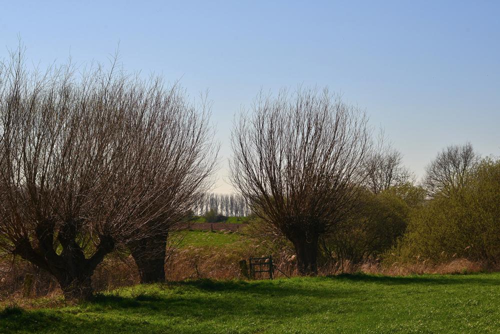 Frühling am Niederrein