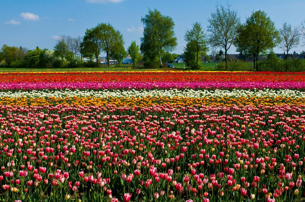 Frühling am Niederrhein.