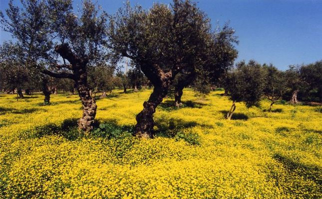 Frühling am Peloponnes