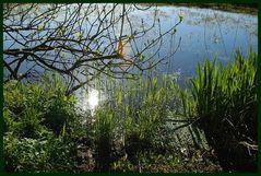 Frühling am Rand eines kleinen Moores