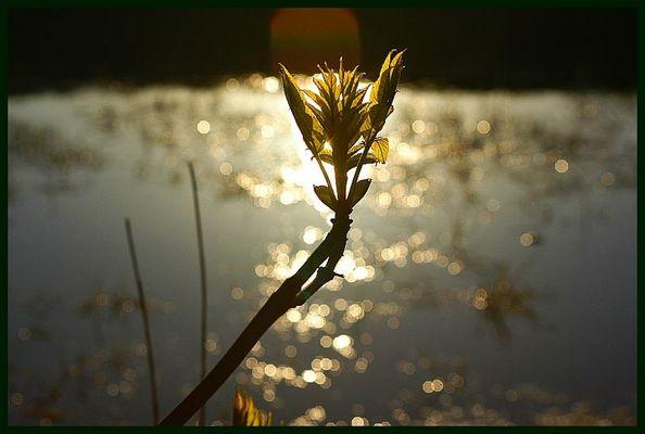 Frühling am Rand eines kleinen Moorsees