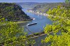 Frühling am Rhein