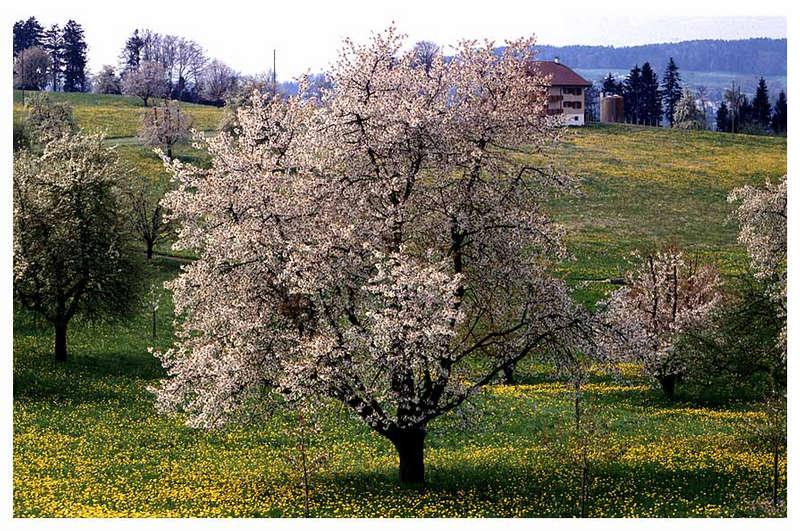 Frühling am RIgi II