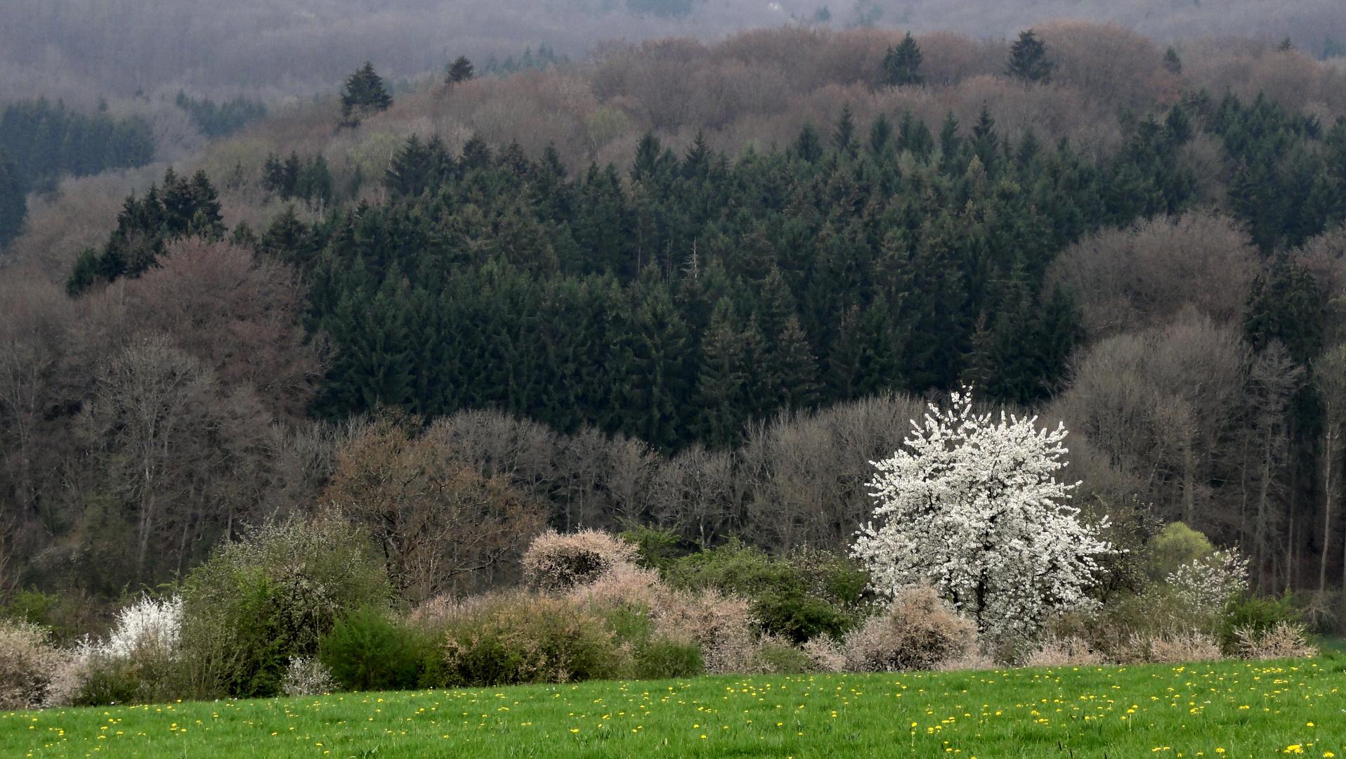 Frühling am Schönbuchrand