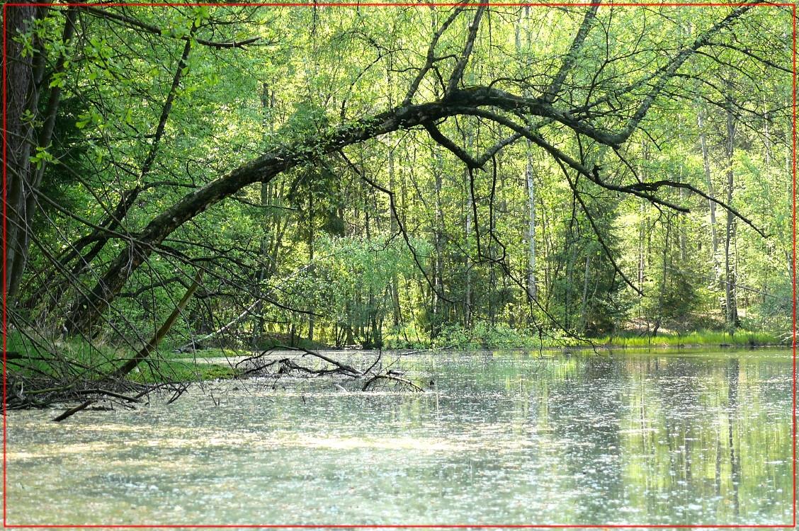 Frühling am Schwarzen Teich