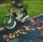 Frühling am Straßenrand