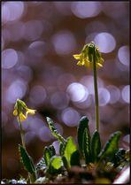 Frühling am Waldbach