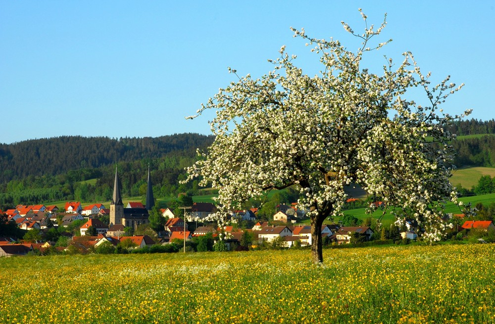 Frühling am Westrand des Fichtelgebirges II