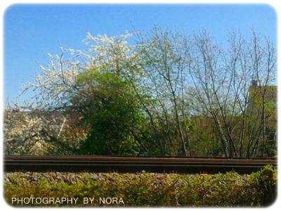 Frühling an der Bahn