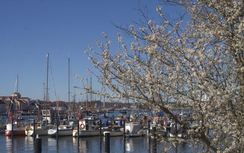 Frühling an der Flensburger Förde