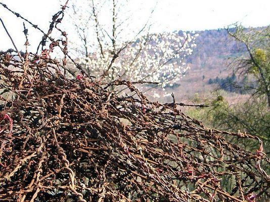 Frühling an der Maginot-Linie in Lembach (F)