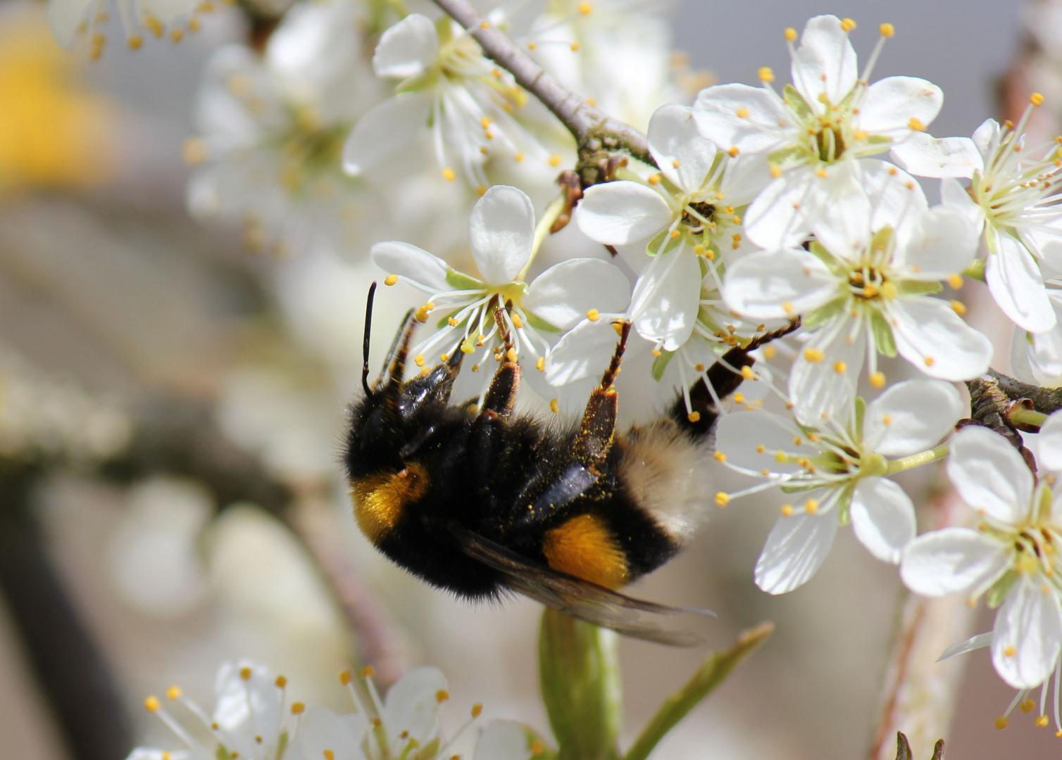 Frühling an der Thur 2