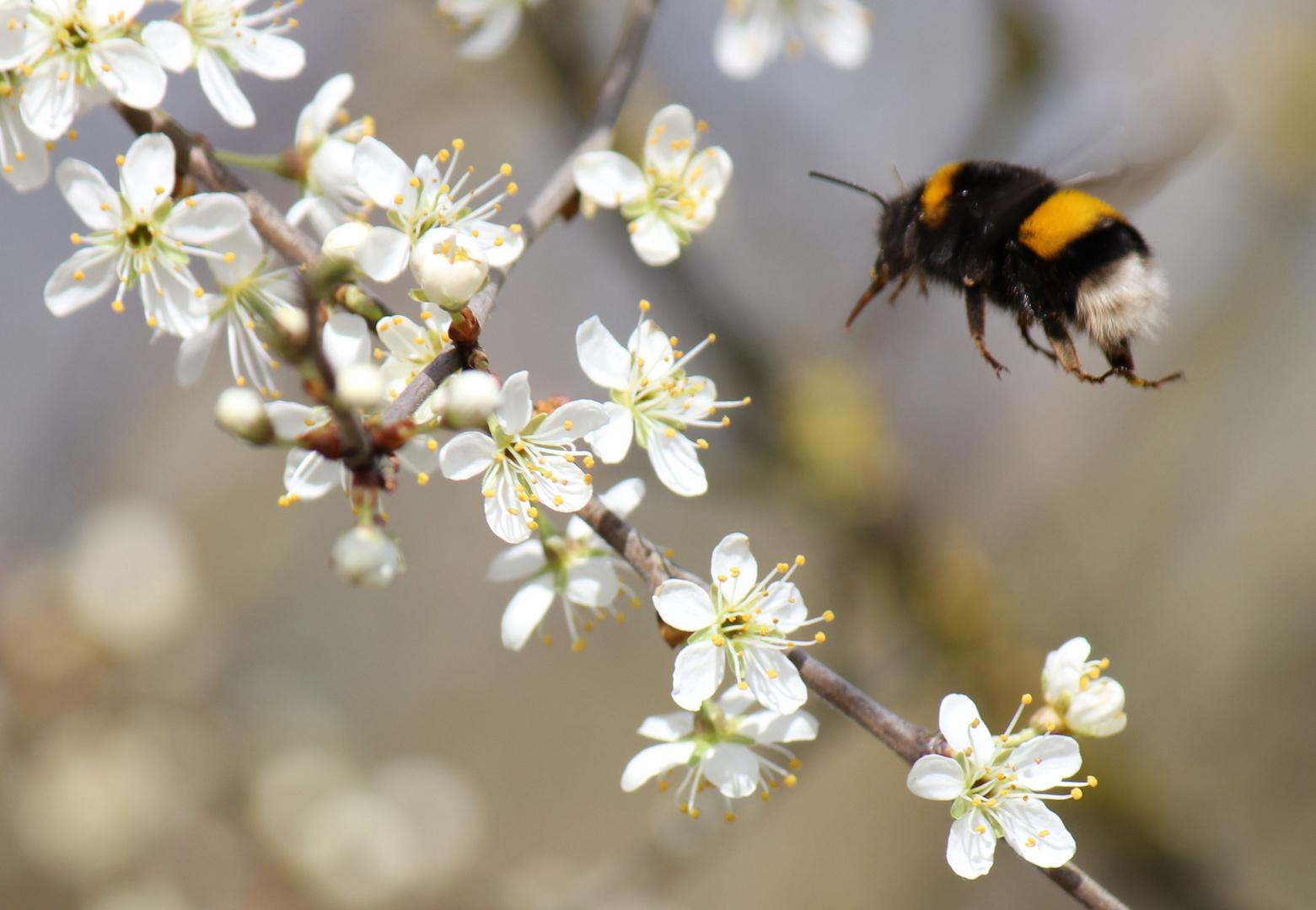 Frühling an der Thur