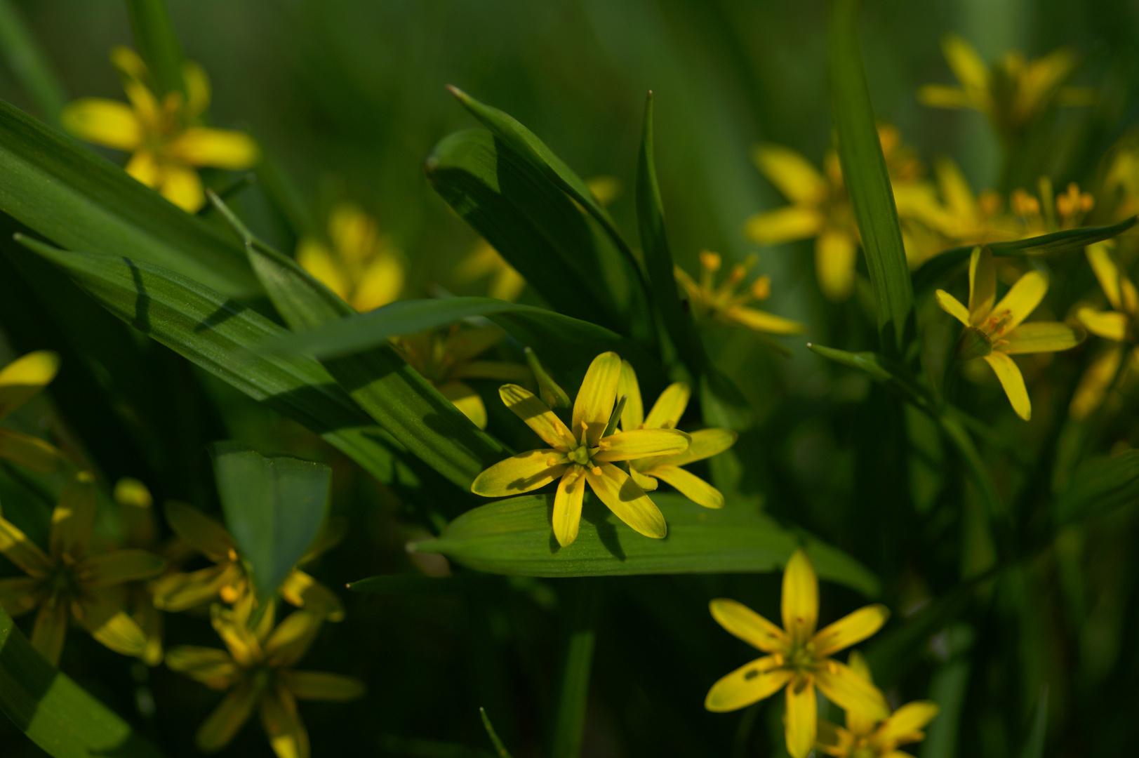 Frühling an der Unstrut