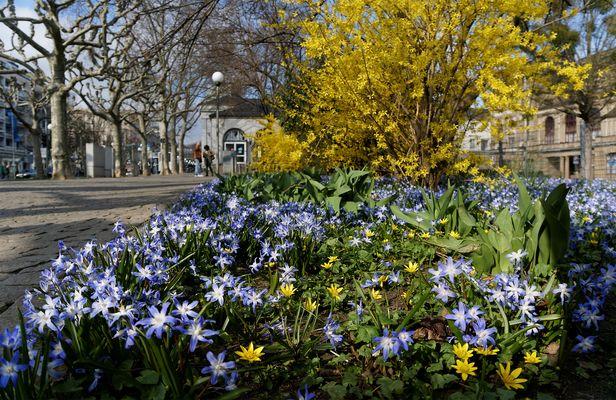 Frühling an der Wilhelmstraße in Wiesbaden (3)