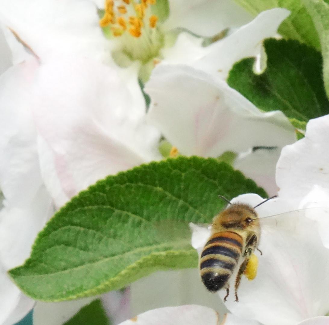 Frühling Arbeiter -2-