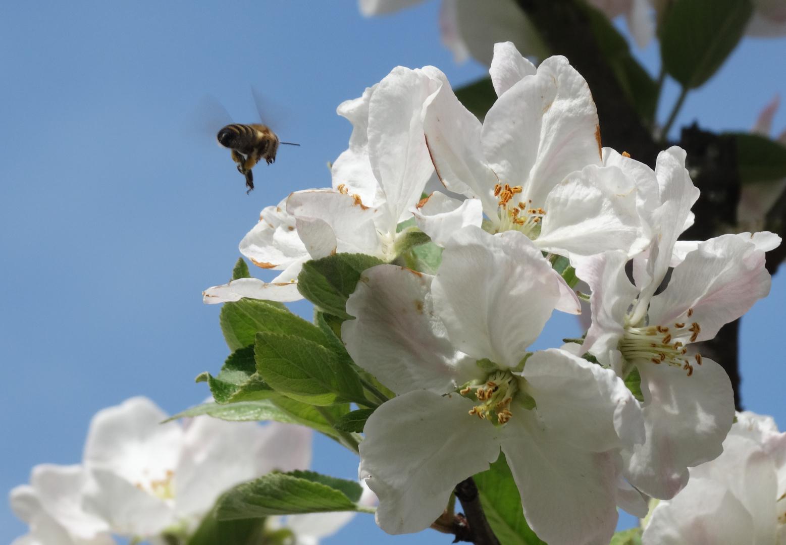 Frühling Arbeiter -3-