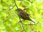 Frühling - auch für die Vögel