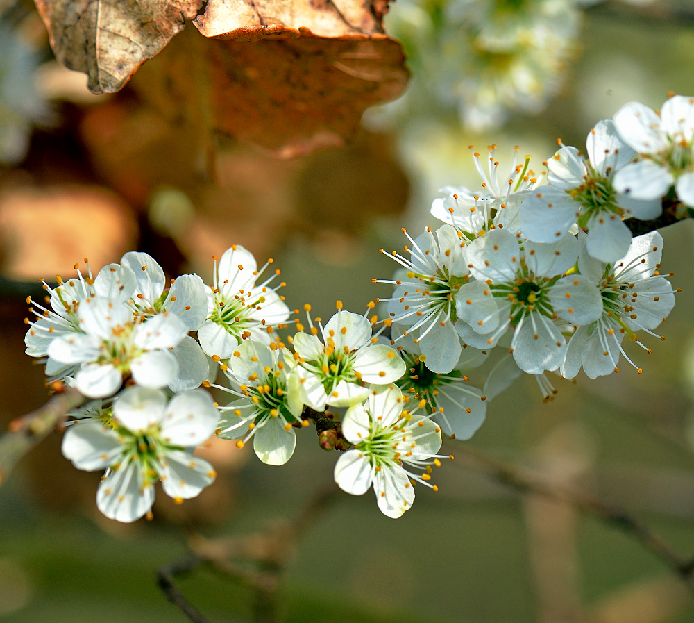 """Frühling auch im Dorf an der Sonne """" Hauingen """" 2."""