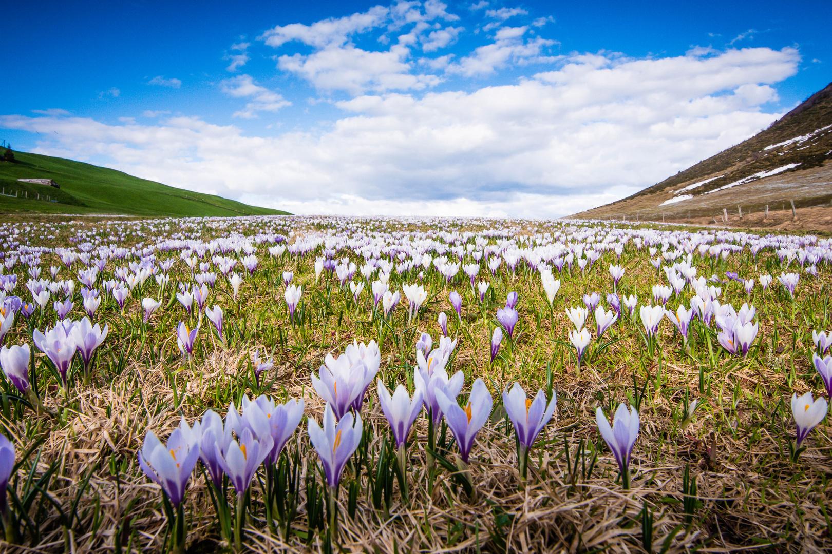 Frühling auf 1800 Meter