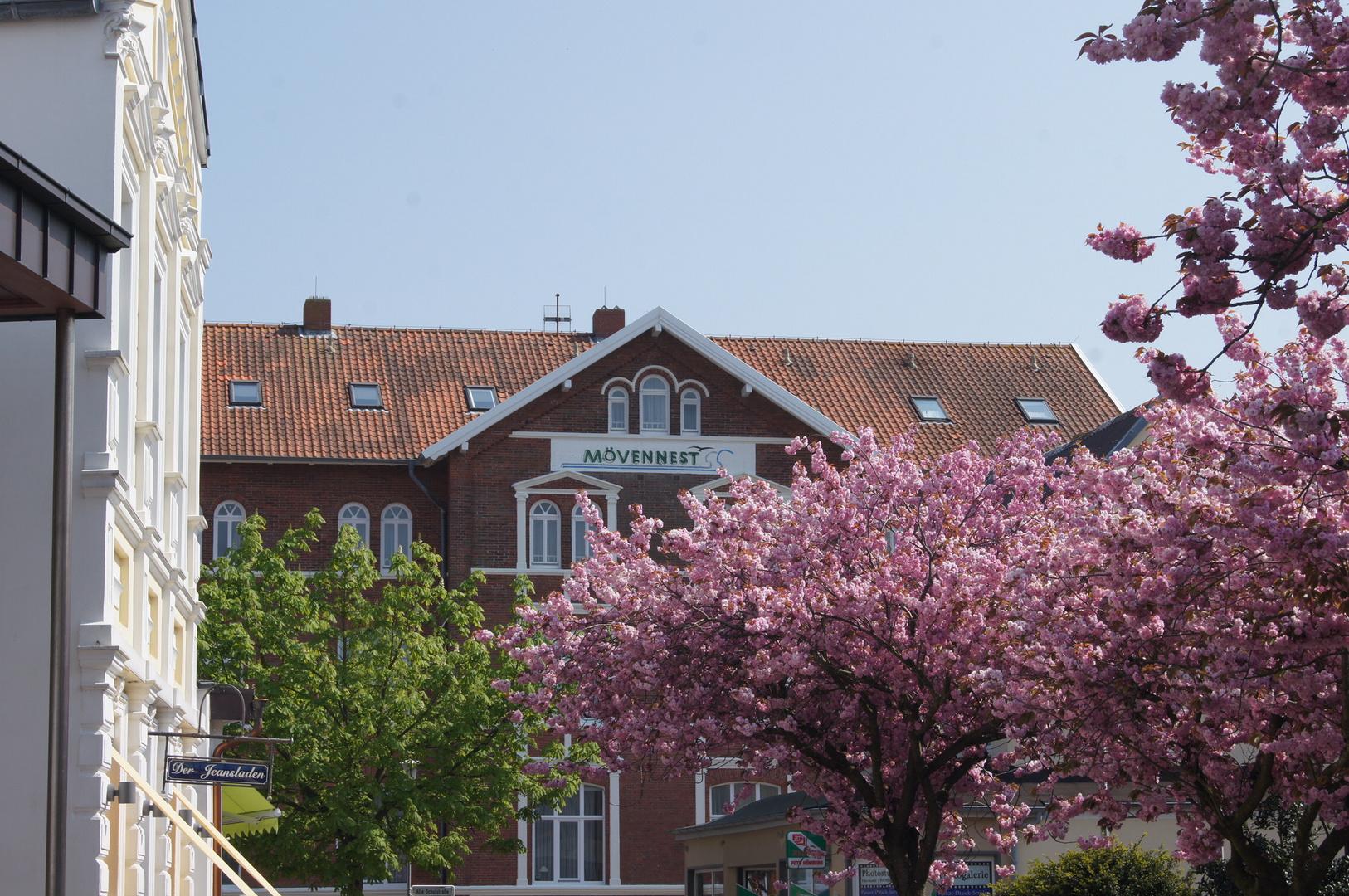 Frühling auf Borkum
