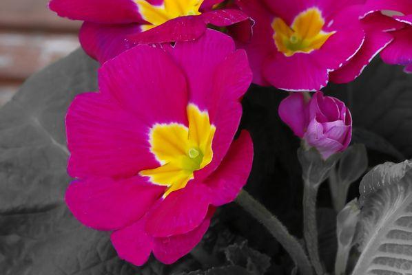 Frühling auf Colour Key