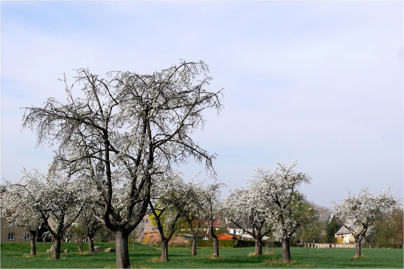 Frühling auf dem Dorf