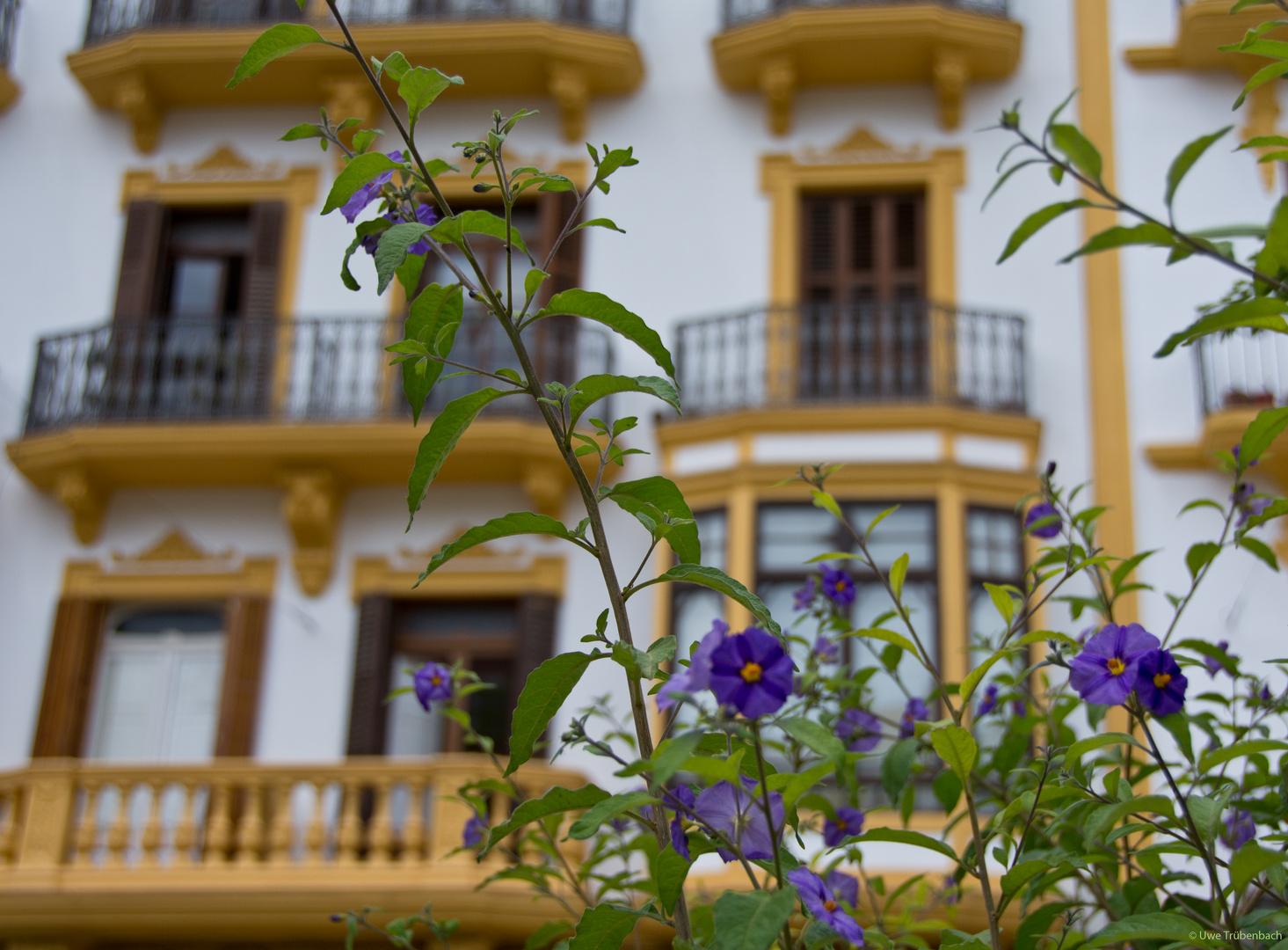 Frühling auf dem Vara de Rey
