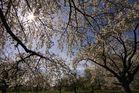 Frühling auf den Streuobstwiesen