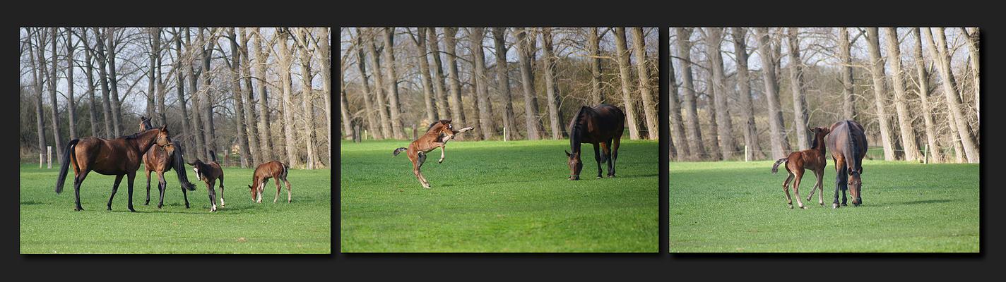 Frühling auf der Pferdekoppel
