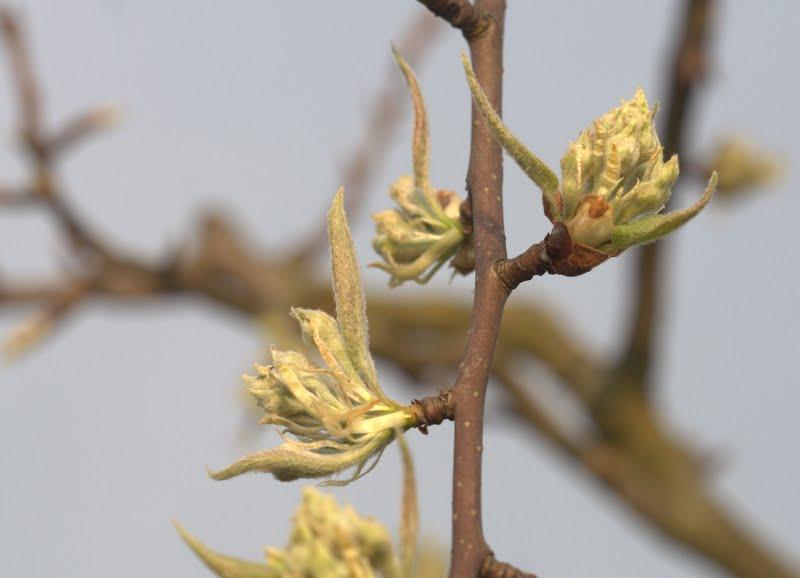 Frühling auf der Streuobstwiese Fernwald 3