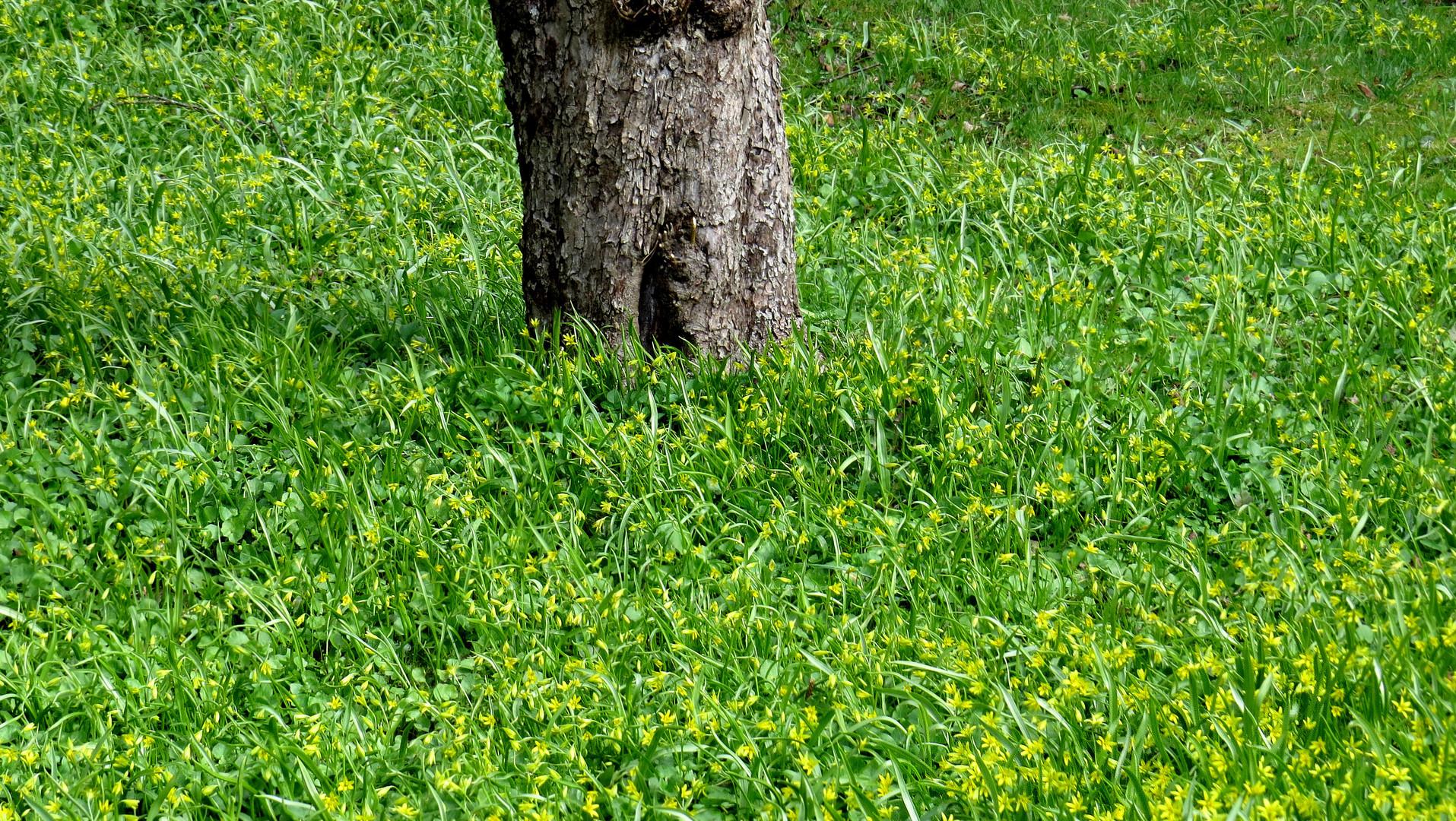 Frühling auf Häradsviken............................