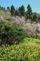 Frühling auf La Palma