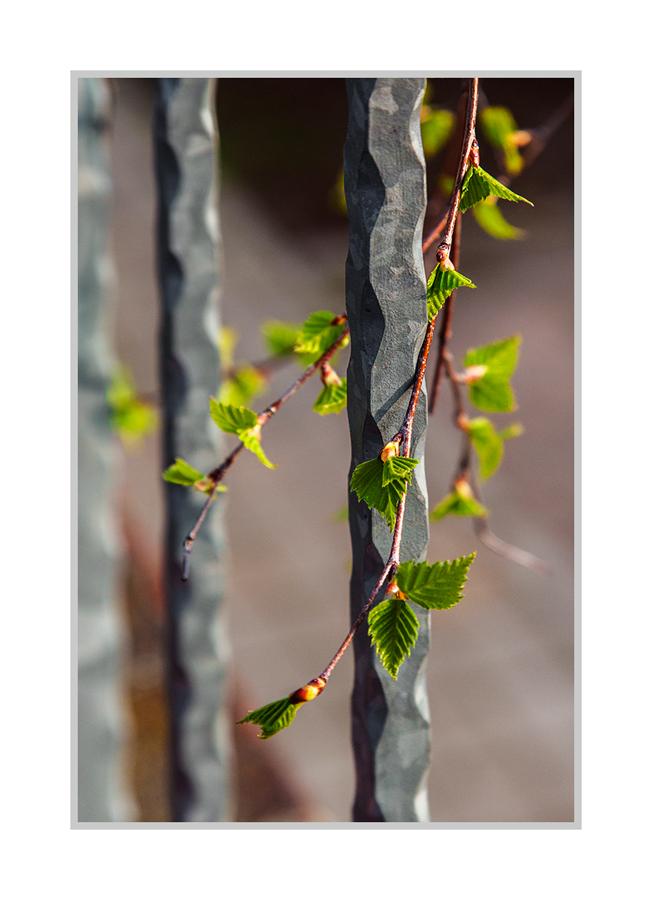 Frühling auf meiner Terrasse