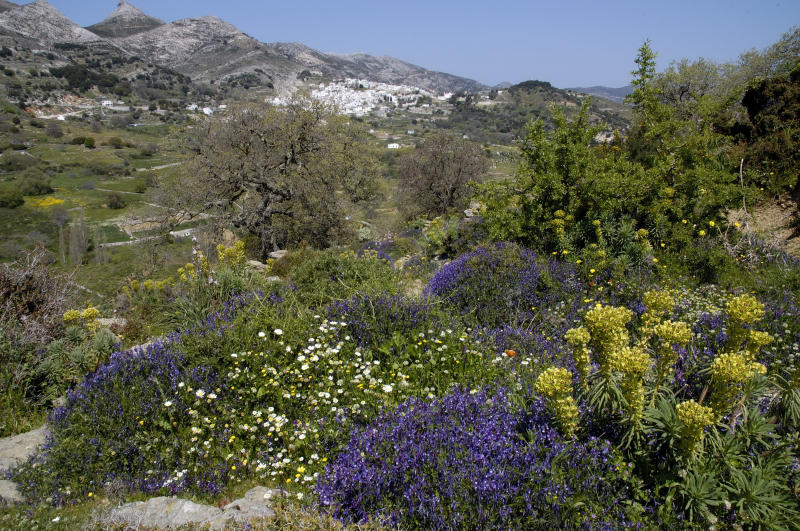Frühling auf Naxos