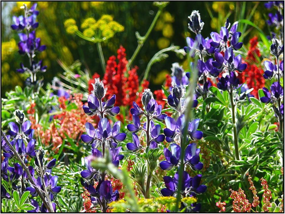 Frühling auf Santorin