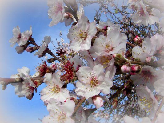 Frühling auf Teneriffa